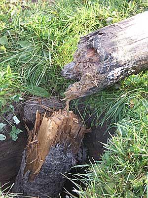 Сгнивший деревянный столб